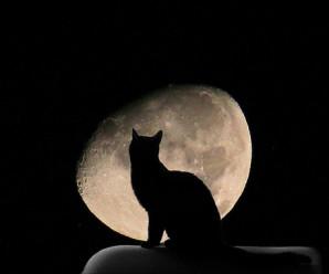 月と猫(モチーフ)